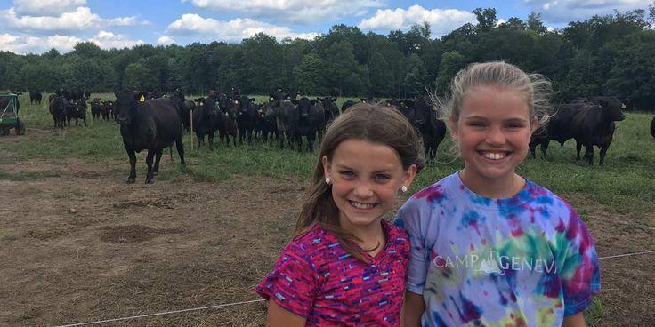 Farm Club Cows