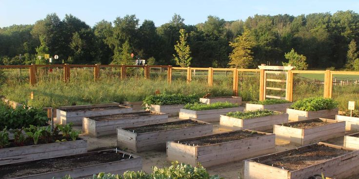 Morning Raised Garden Beds
