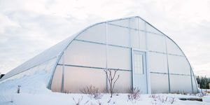 Hoophouse Winter